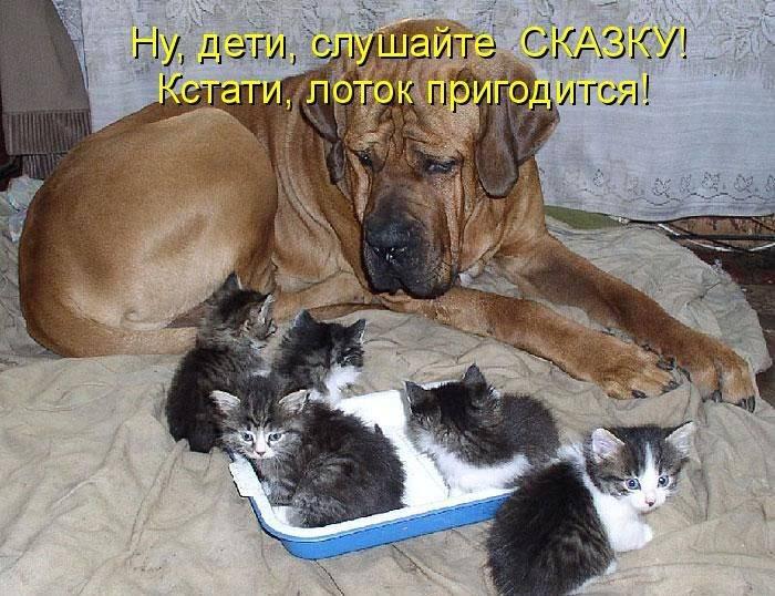 http://doseng.org/uploads/posts/2011-07/1309464318_1309111204_1308901008_kotomatrix_46.jpg