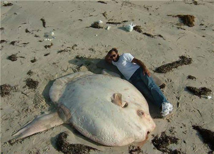 Картинки по запросу Подборка фотографий с самыми гигантскими существами