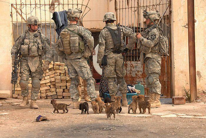 Собаки и кошки на руках солдат (48 фото)