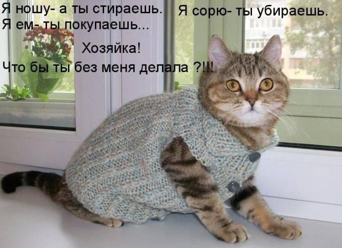 http://doseng.org/uploads/posts/2011-07/1309991302_1291398063_1290897770_kotomatrix_12.jpg