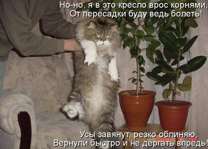 Прикольные картинки с котами и надписями до слез, а.а. открытки как