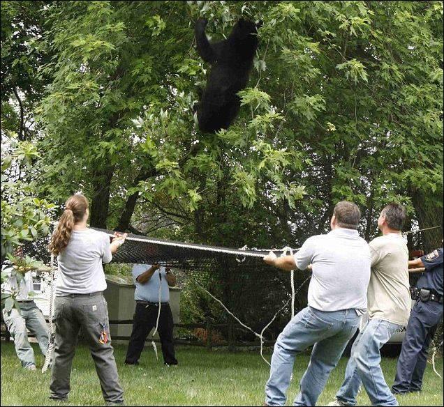 Медведь сбежал из зоопарка (3 фото)