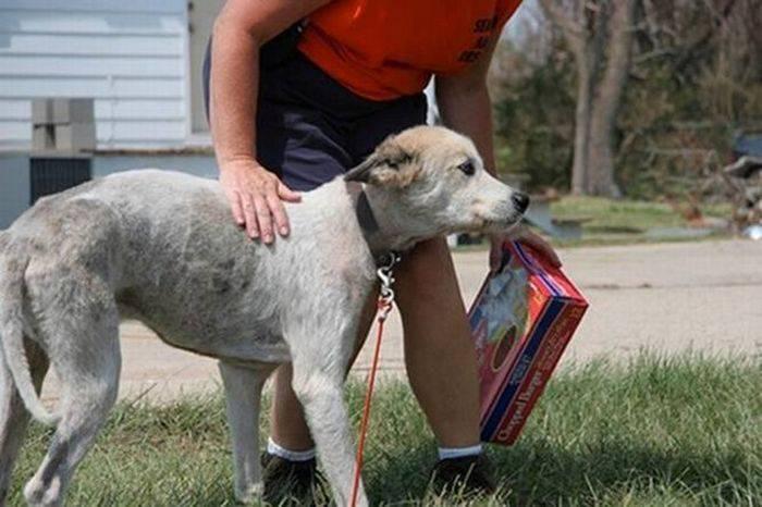 Спасение собак после торнадо в США (10 фото)