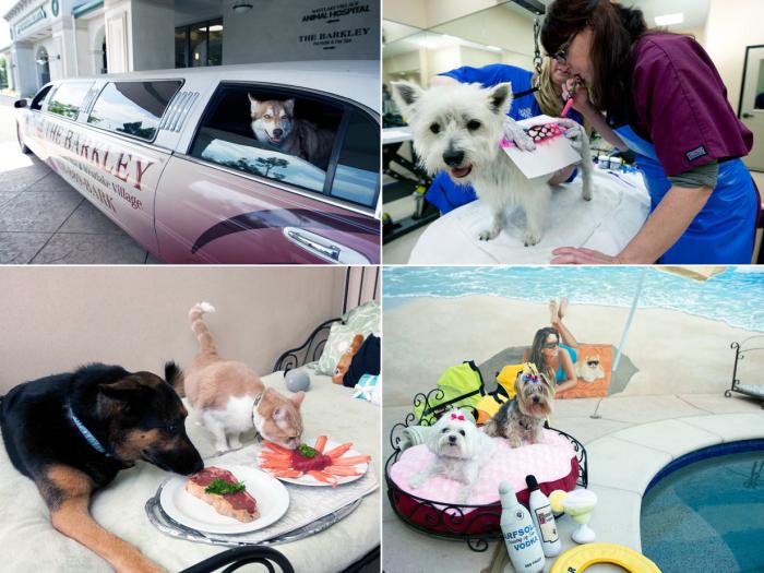 """Отель """"Barkley"""" для животных (16 фото)"""