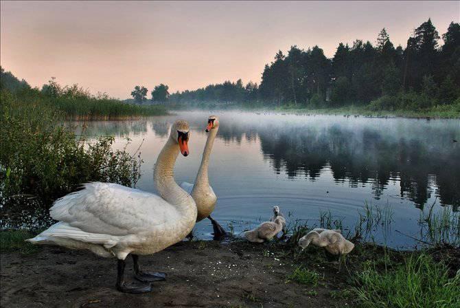 Красивые романтические фотографии 40