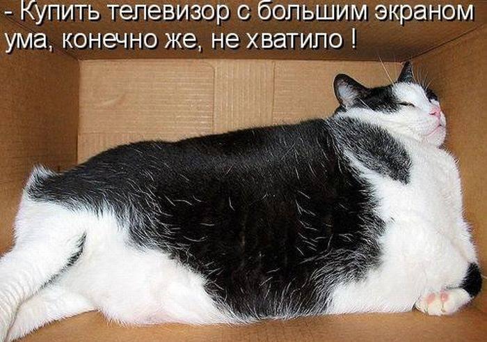 Смешные фото с надписями