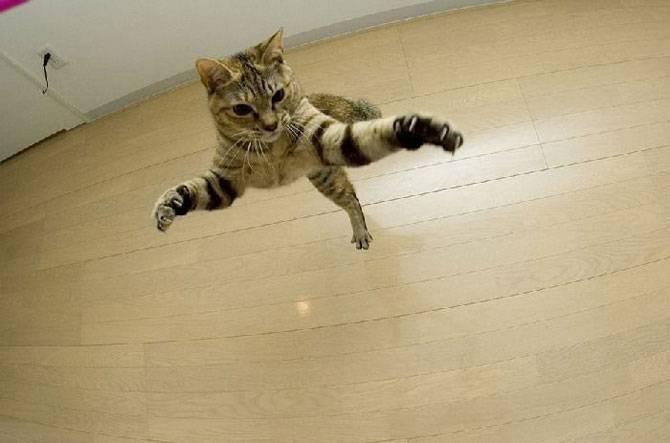 Кошки тоже летают