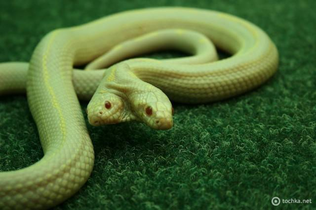 как выглядит змеи в екатеринбурге фото