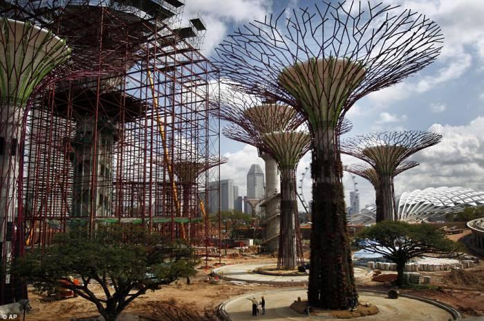 Деревья в Сингапуре (4 фото)