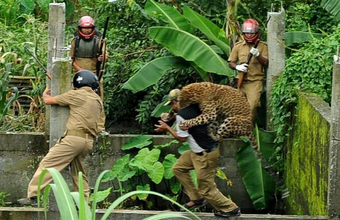 Как поймать леопарда, а не быть пойманным им (8 фото)