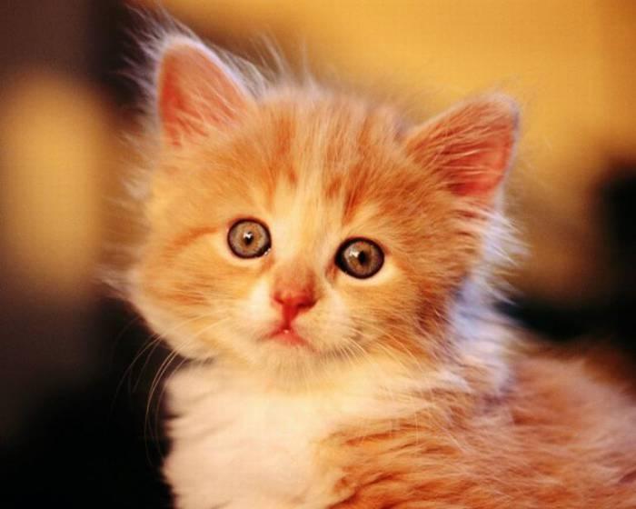 Милые забавные котята