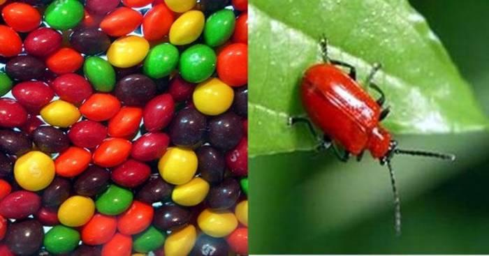 Самые отвратительные пищевые ингредиенты (10 фото)