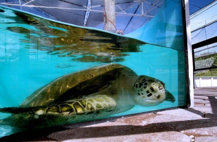 Спасение черепахи (12 фото)