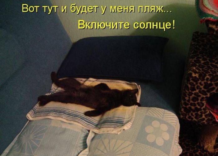 Забавный кото-лайф