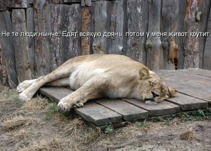 Открытку фото, картинки с животными со смешными надписями