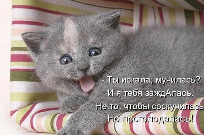 Смешные надписи к картинкам о животных