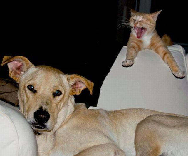 Позитив в фото с животными