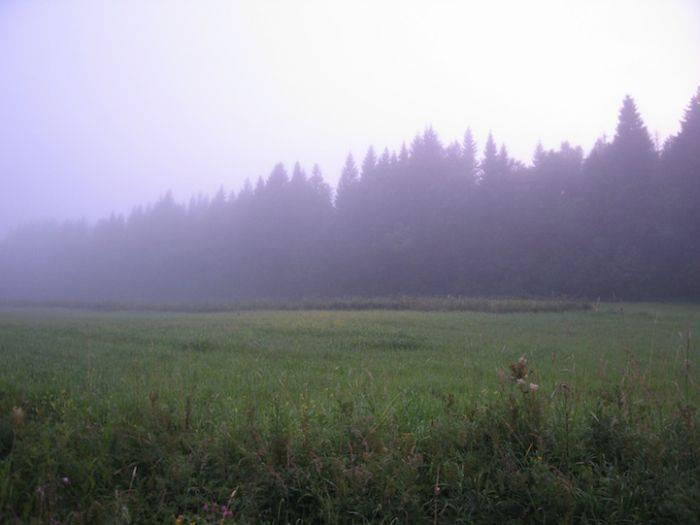 Розыгрыш в лесу (7 фото)