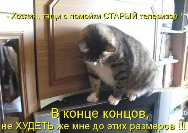 http://doseng.org/uploads/posts/2011-09/1317069527_1316689009_1313579338_kotomatrix_0962.jpg