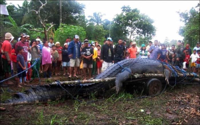 Гигантский крокодил (4 фото)