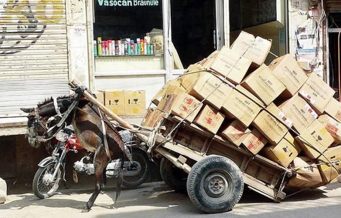 Перегруженные транспортные средства (50 фото)