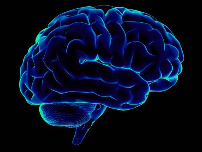 Интересные факты о головном мозге