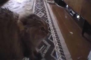 Еще один говорящий кот