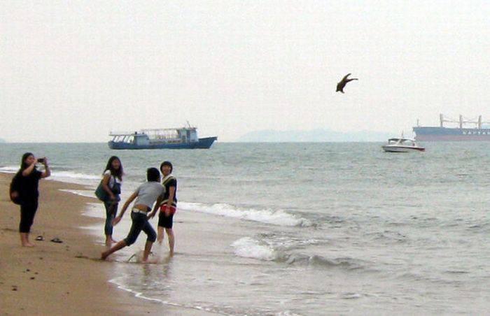 Щенок чудом не утонул в океане