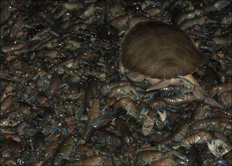сезон ловли раков в беларуси