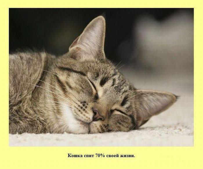 Картинка Спящий кот.