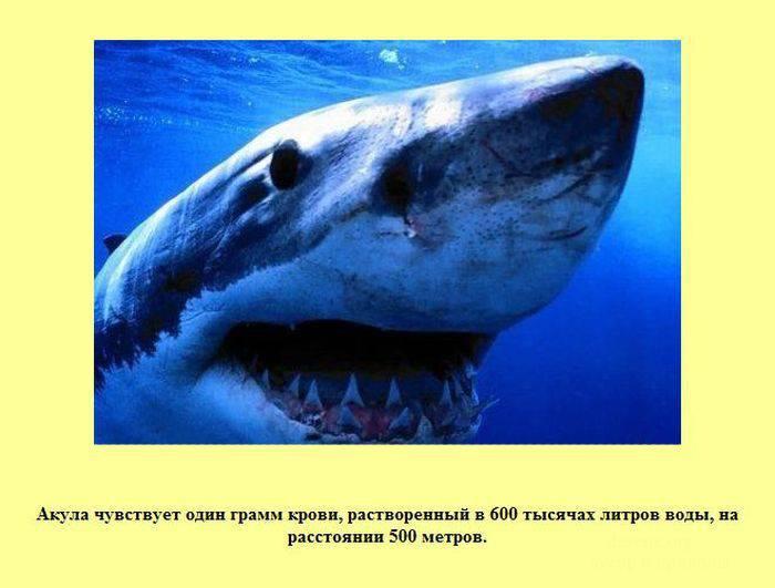 Интересные факты в картинках (30 картинок)