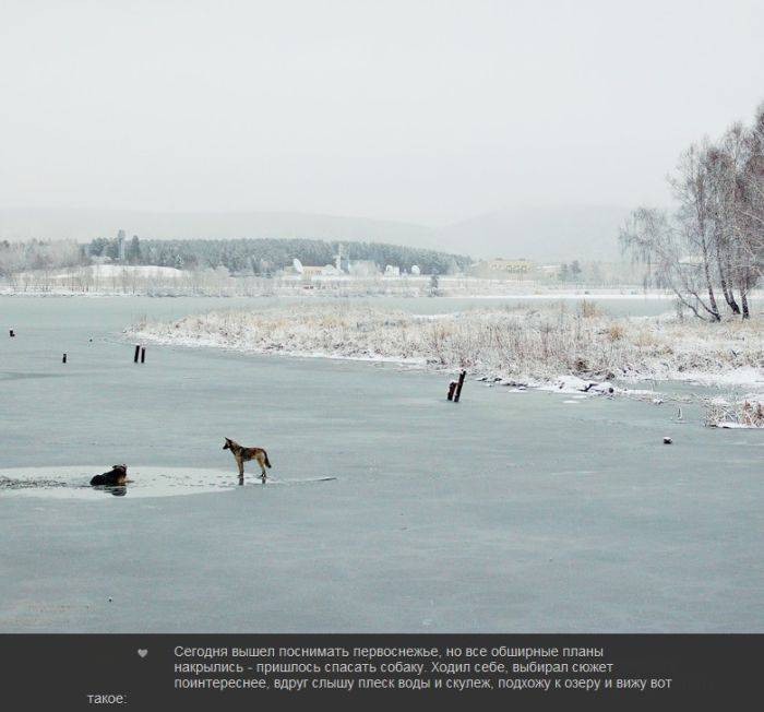 Чудесное спасение собаки (7 фото)