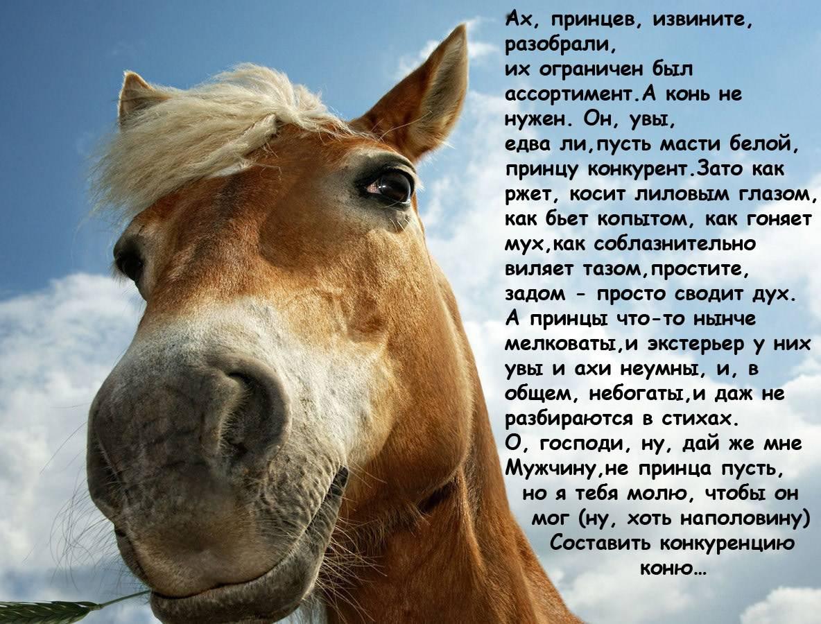 Прикольные картинки про лошадь и работу, семейного счастья