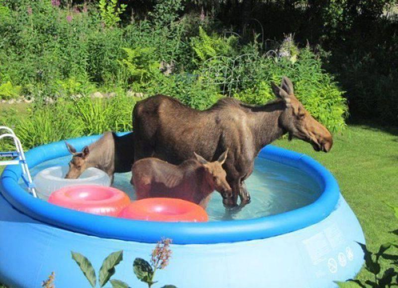 Смотреть Животные Фотографии смешных животных бесплатно (38 фото.