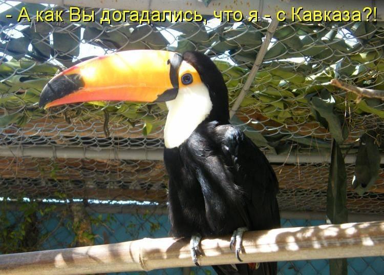 Картинки смешных птиц с надписью, открытки кошками