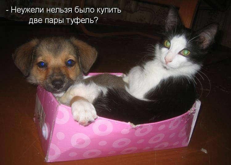 Картинки с надписями про кошек и собак, надписями про