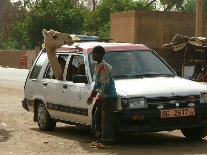Только в Африке! (43 фото)