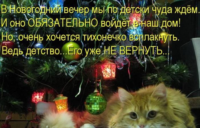 Новогодняя котопятница (25 фото)