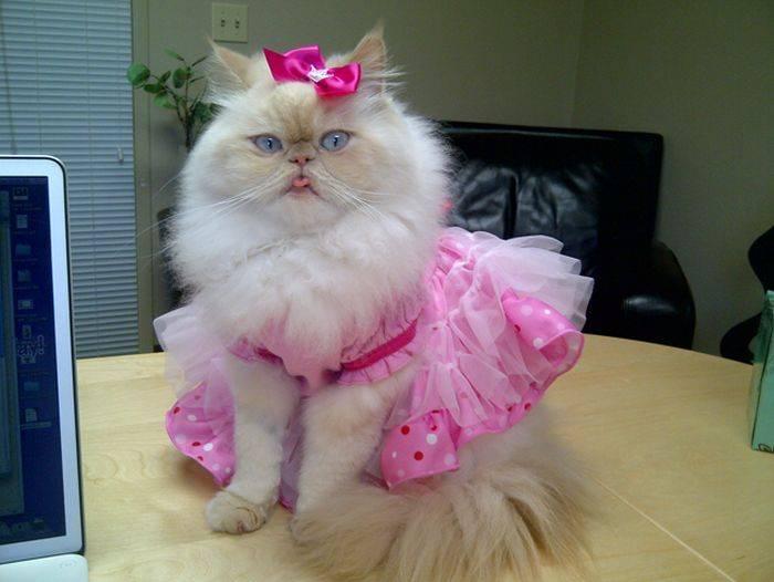 Забавная кошка-модница (58 фото)