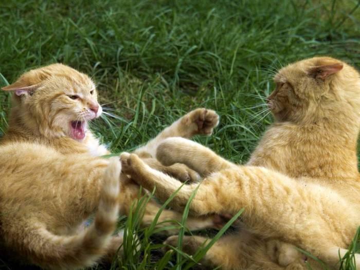 Коты - настоящие герои (4 рассказа)