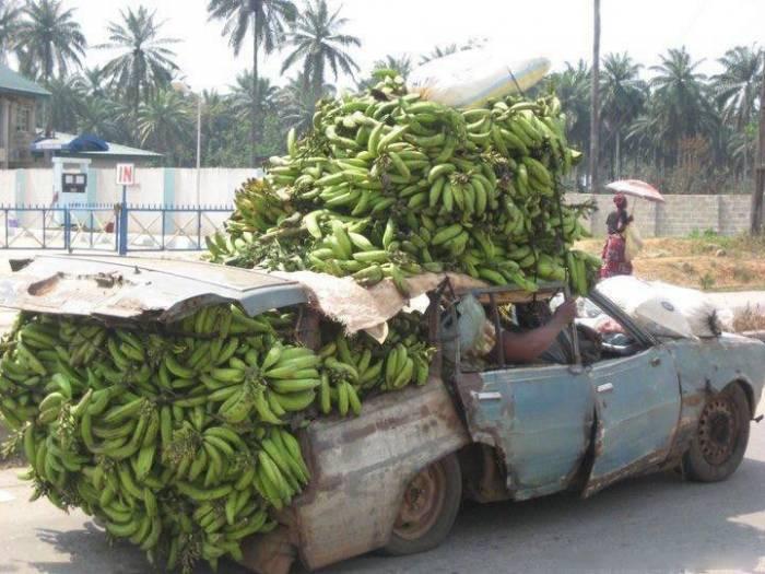 Такое увидишь только в Африке (14 фото)