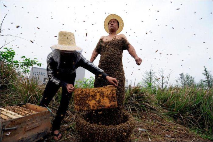 Костюм из живых пчел (3 фото)