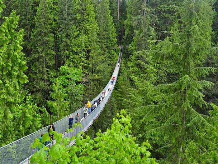Мост длиной 136 метров (8 фото)