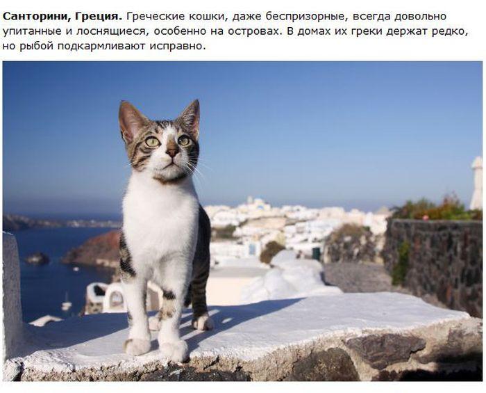 Интересное о кошках в разных городах (28 фото)