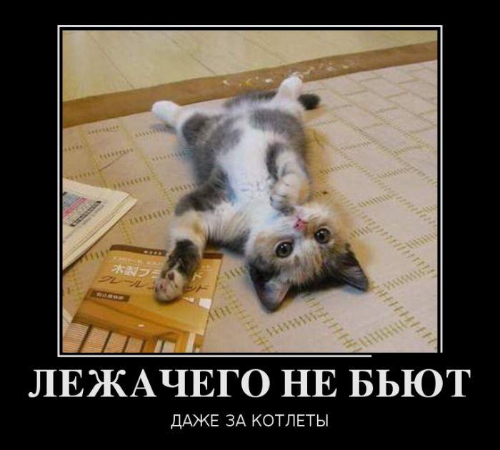 http://doseng.org/uploads/posts/2012-06/1339112534_023.jpg