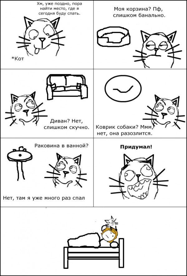 Картинки мемы приколы про котов, поздравлением дню