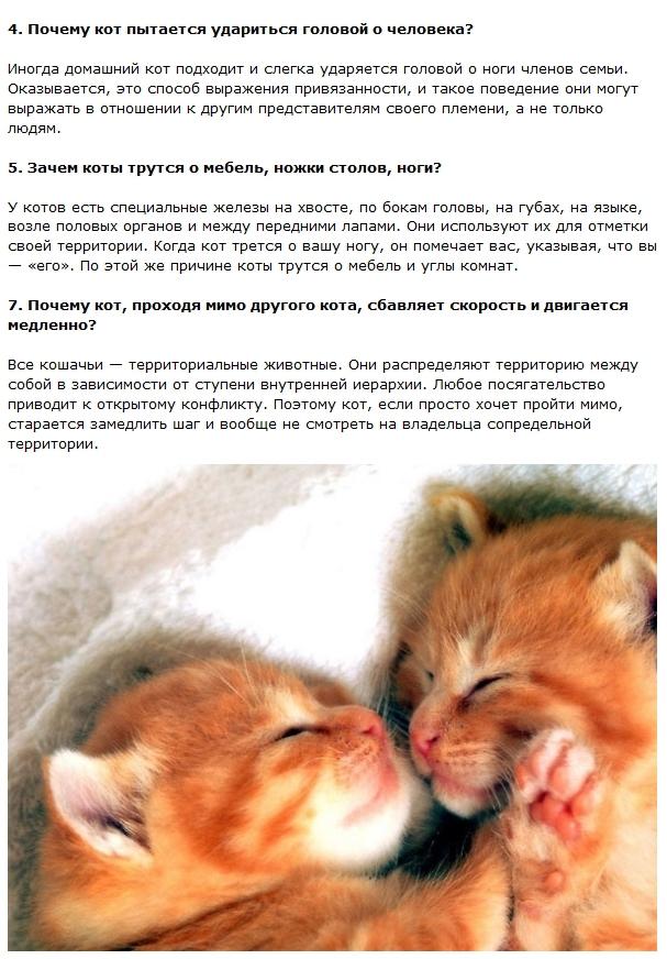 Факты о котах с картинками