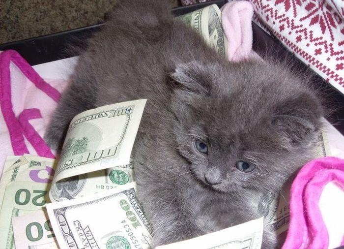 Коты любят деньги (64 фото)