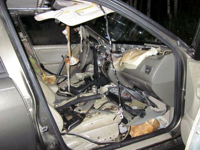 Кто нападает на автомобили? (9 фото)