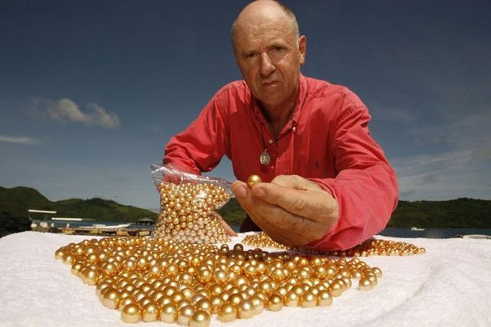 Производство редкого золотого жемчуга (23 фото)